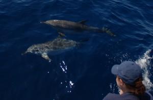 Mensch und Delfin