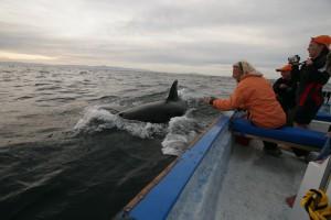Baja California Febr. 2009, Whalewatching with Swannie